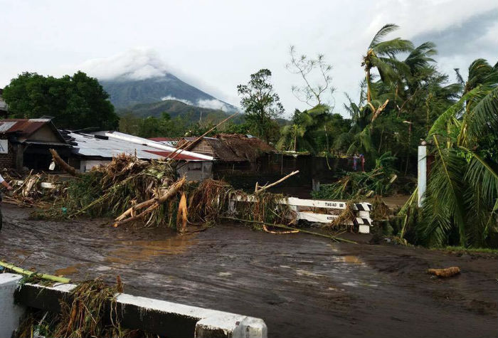 fallen trees and damaged buildings